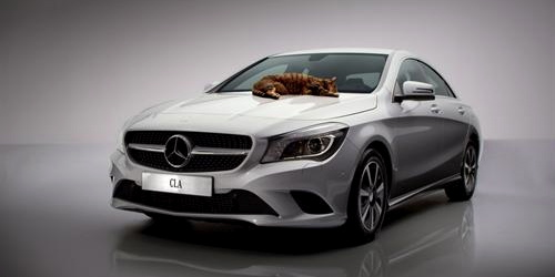 No cats were harmed during the making of this Mercedes-CLA-Class video!-cla_with_catittude.jpg